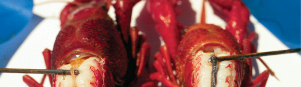 Purging Crawfish to Decrease Gut Contents